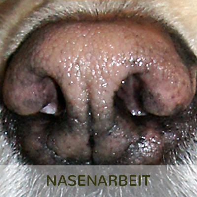 NASENARBEIT